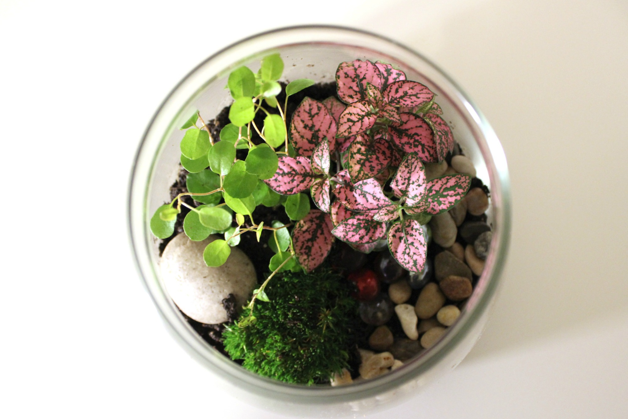 Terrariums Anne Of Green Gardens