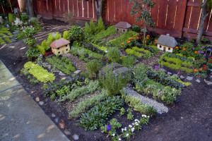 Nancy's Miniature Garden
