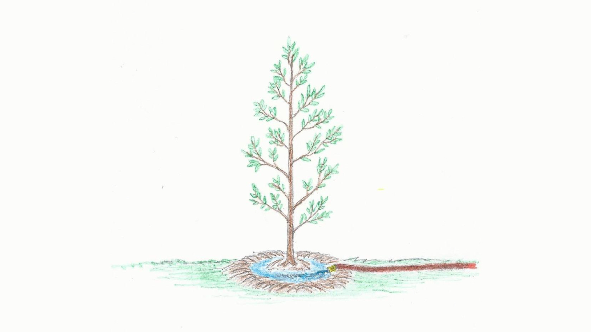 Landscape Gardening Planting and Watering A Tree Anne-of-Green-Gardens