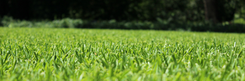 Natural Way Lawn Care