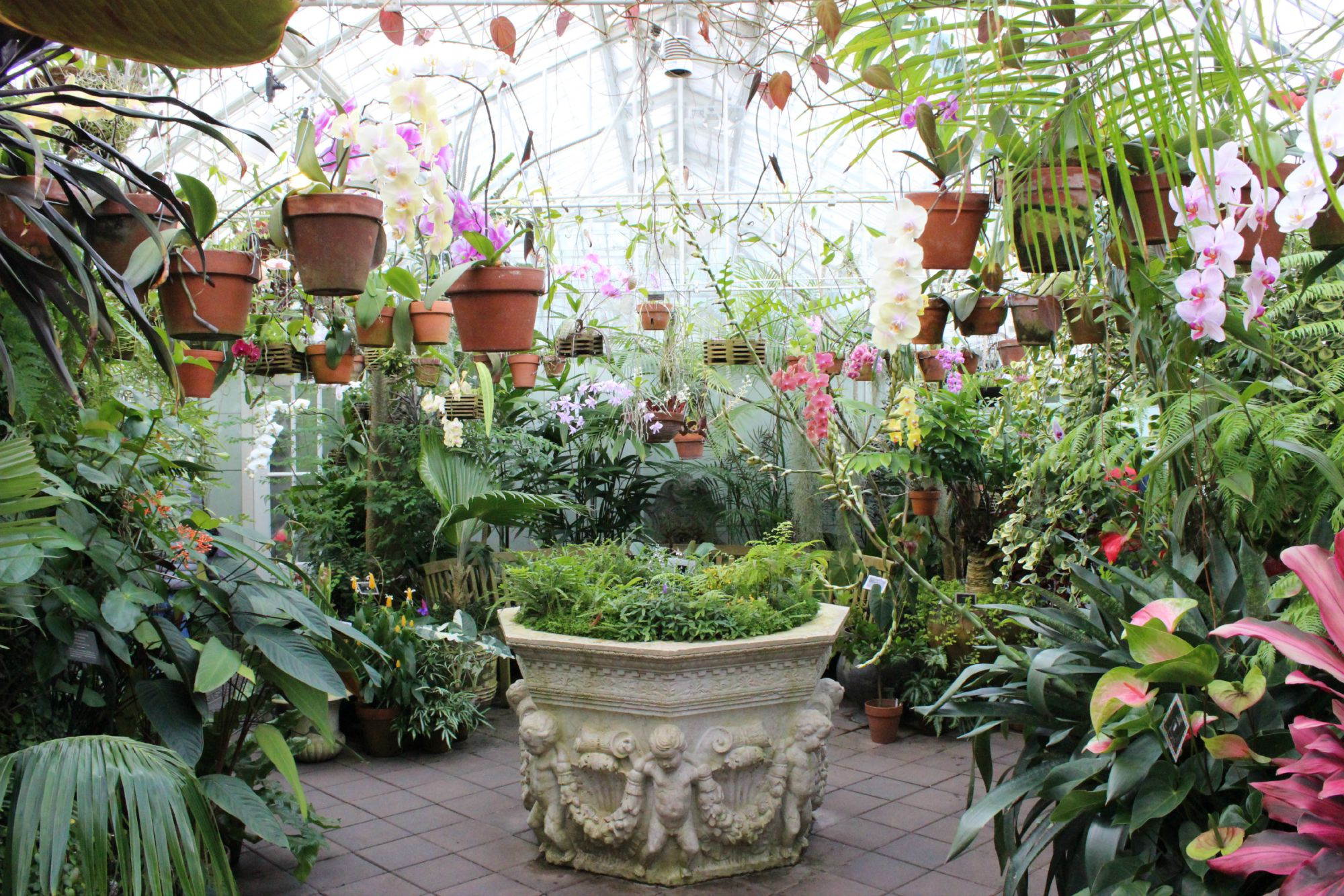 Potted Plants Anne Of Green Gardens