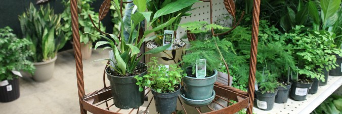 Houseplants-banner-Anne-of-Green-Gardens