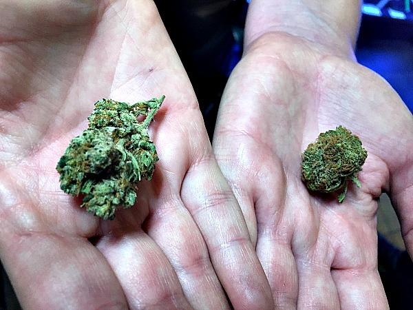 marijuana-buds-anne-of-green-gardens